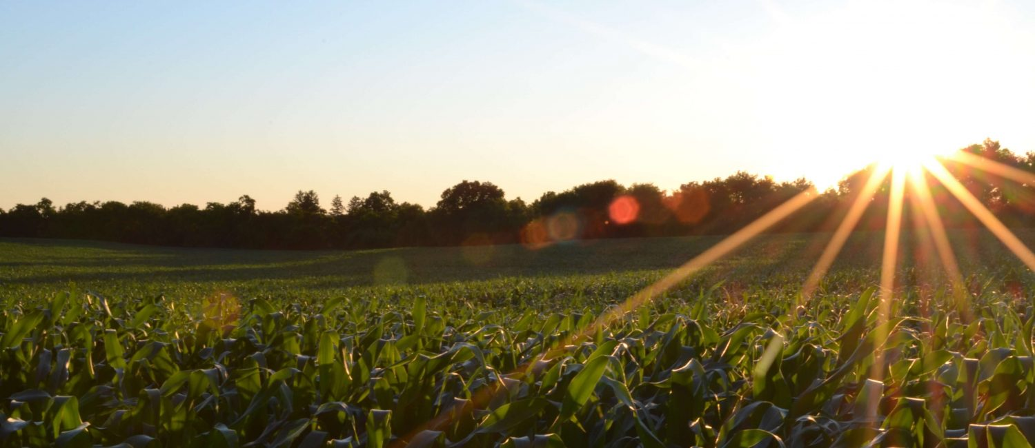 This is a photo of a field, green pastures on a sunny morning